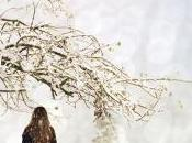 Susan Fletcher, bûcher sous neige (2010)