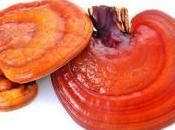 OBÉSITÉ: champignons magiques, mais contre surpoids Nature Communications