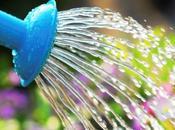 Sauvez plantes canicule