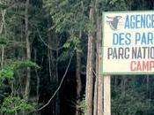 nouveau rapport l'UICN témoigne déclin sauvage Afrique centrale l'ouest