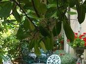 jardin secret plein cœur l'ile Saint Louis