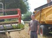 agriculteurs sont prêts enfoncer clou. moisson prometteuse mais grogne demeure.
