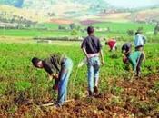 Ministre Commerce Belaïb agriculteurs penchent problèmes commercialisation