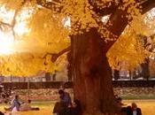 dimanche après-midi Strasbourg Place République, sanctuaire d'or l'arbre paix,