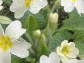 Remèdes naturels fleurs