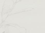 Petite Escalère lance Appel candidature Auteurs-Illustrateurs francophones