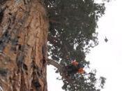 arbre 3200 photographié pour fois image