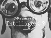 Comprendre l'intelligence chien concepts études