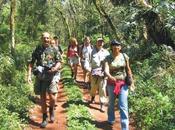 Iguaçu trilha poço preto