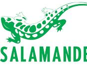 Stock Salamander Strasbourg (67)