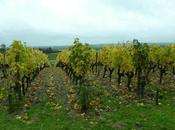 Bordeaux Primeurs 2015 l'appellation Sauternes-Barsac l'UGC Yquem