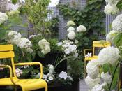 chaises jaunes pour pimper jardin, terrasse,...