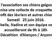 """Sos chiens galgos""au Decathlon d'Alençon/Arçonnay samedi juin"