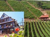 Dambach-la-Ville petit train vignes