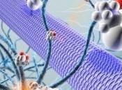 ÉPILEPSIE: neuroprotecteurs plasticité cérébrale Scientific Reports