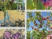 prunes jardin