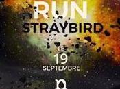 StrayBird Run, clip interactif