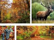 L'automne etonne