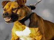 comment dresser chien agressif avec autres chiens