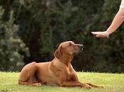 avis 'Dresser votre chien minutes jour' Caroline Lange