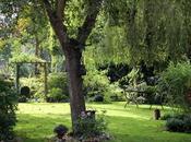 Jardin d'automne...