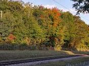 L'automne montre bout