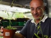 D'après Stéphano Mancuso plantes peuvent voir