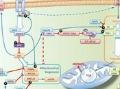 #trendsincellbiology #carburant #glycolyse #cyclecellulaire #ADN L'alimentation carburant cycle cellulaire