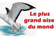 L'oiseau plus grand monde