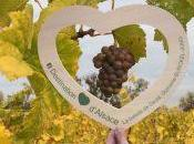Palpitant Week-End Coeur d'Alsace