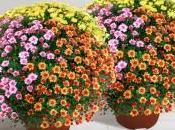 Faire livrer fleurs plantes dans cimetière avec Interflora