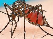 Eloge moustique thaï