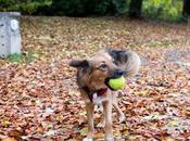 chien couleurs l'automne