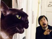 reproduit films cultes avec chat