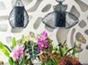 Noël, illuminez votre maison avec l'Orchidée