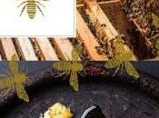 Comment tout savoir abeilles