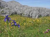 """""""insitu-flora"""" très beau site découvrir"""