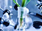 PLAIES CANCÉREUSES Premier rapport d'efficacité l'huile cannabis Journal Pain Symptom Management