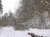 Bois-énergie, ressource naturelle pour combattre froid