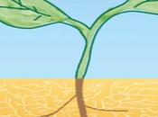 Pourquoi mycorhizes sont importantes pour plantes