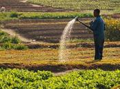 polémique l'avenir alimentaire l'Afrique