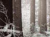 L'hiver tuer