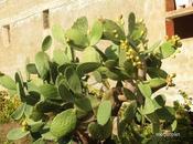 Pays étranger Sicile végétation
