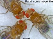 PARKINSON Cibler mitochondries pour booster neurones Cell Death Differentiation
