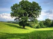 Achat revente terrain agricole plan