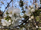 Fleurs cerisier campagne merde