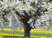 C'est printemps