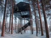 chambre d'hôtel perchée dans arbre architectes Snøhetta