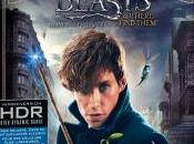 [Test Blu-ray Animaux Fantastiques