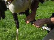 L'imprimerie service oiseaux jambe bois secrétaire...